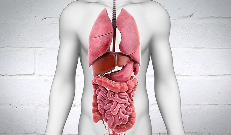 digestive-system-how-it-works